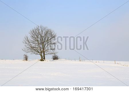 Winter landscape with single tree blue sky