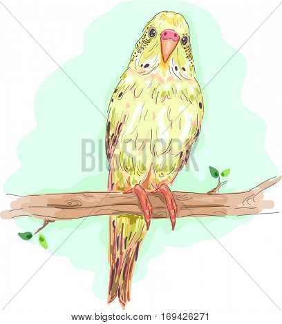 Animal Illustration of a Colorful Budgie Perched on a Branch Staring Curiously