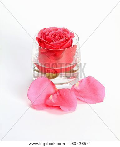 Rose bud in glass with water and petals on a white background
