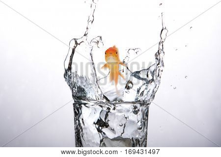 Goldfish swimming with mouth open against white screen against close-up of water splashing in glass 3d