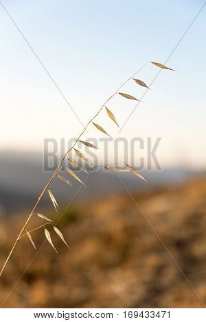 Blades of grass in Carmel Valley California.