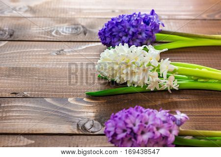 Fresh Hyacinth Flowers On Wooden Background. Beautiful Idea For Greeting Cards For Valentine's Day,
