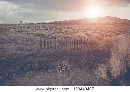 Arizona Raw Desert Landscape During Sunset. Arizona State United States of America.