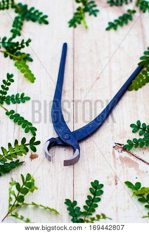 Tools for houseplants. Tongs for indoor plants on a light wooden background. Tool for cutting bonsai.