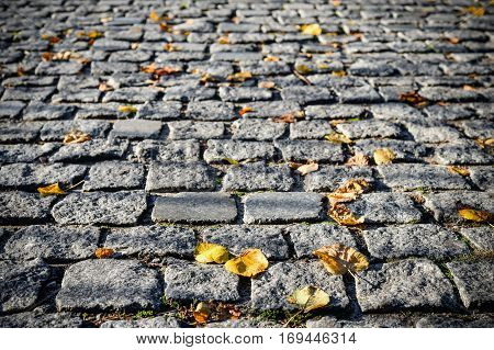 Grey pavement stone background with black out edges. Autumn leaves on a stone pavement or walkway. Autumn background.