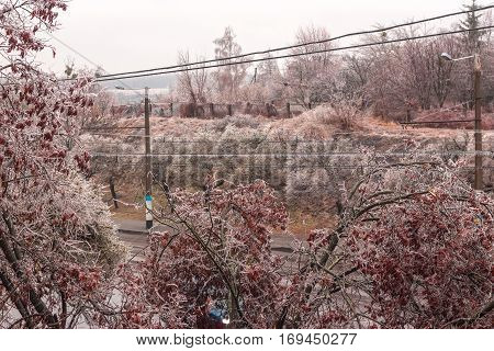 Frozen bushes on the edge of country road