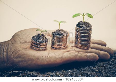 hands holding trees growing on three piles of coins / csr / sustainable development / tree growing on stack of coins