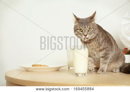 Cute cat drinking milk, closeup