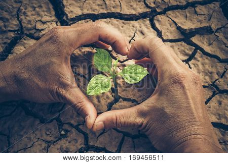 Love and protect nature. Hands forming a heart shape around a tree growing on cracked ground. Save the world. Environmental problems. Growing tree.