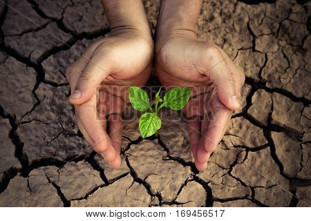 Love and protect nature. Hands holding a tree growing on cracked ground. Save the world. Environmental problems. Growing tree.