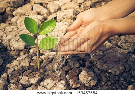 Hands watering a tree on cracked earth / love nature / environmental destruction / Protect nature