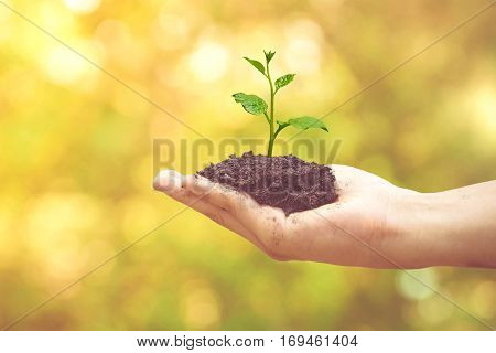 Hand holding a young green tree with yellow and green bokeh background / Protect and conserve nature concept