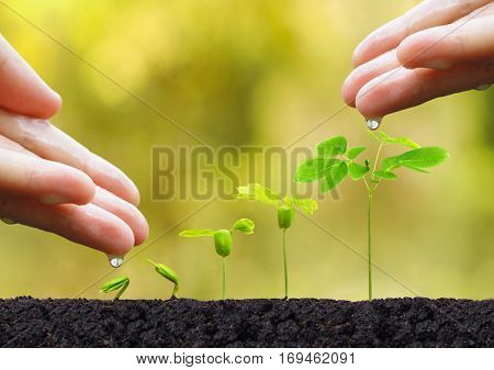 Agriculture. Plant seedling. Hand nurturing and watering young baby plants growing in germination sequence on fertile soil with natural green background