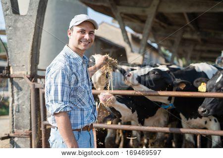 Smiling farmer feeding his cows