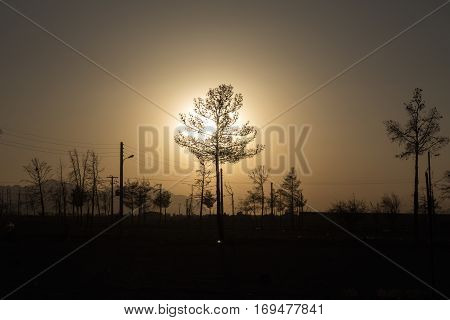 Silouhette of a young pine tree into the sunset light Isfahan Iran