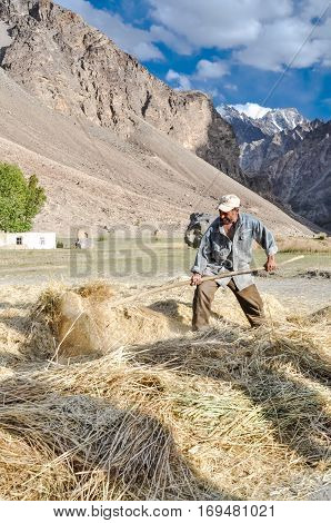 Drying Of Hay In Tajikistan