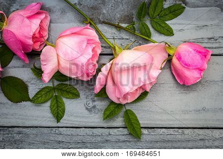 Romantic pink roses on the green background