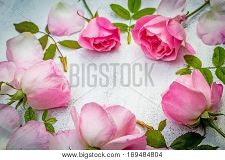 Romantic pink roses on white painted background