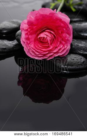 Still life with red ranunculus and therapy stones