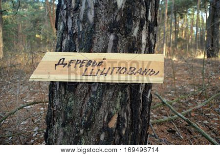 Translation of the inscription on the sign from Russian -.Trees studded. Warning for lumbers. Peoples protection of nature from export wood in Europe. Ukraine
