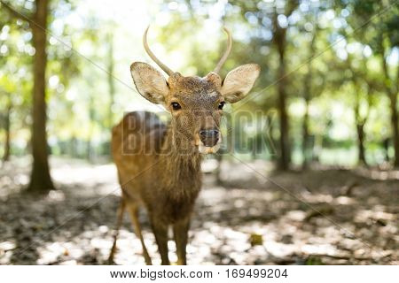 Deer at outdoor