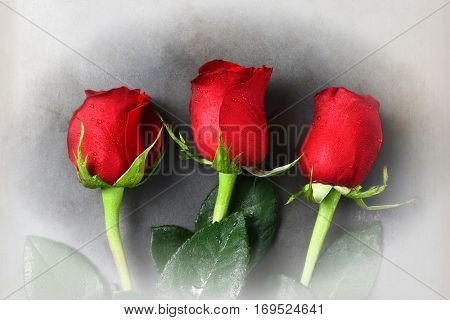 Three red rose buds for Valentines Day on a gray surface with a vintage dreamy vignette effect.