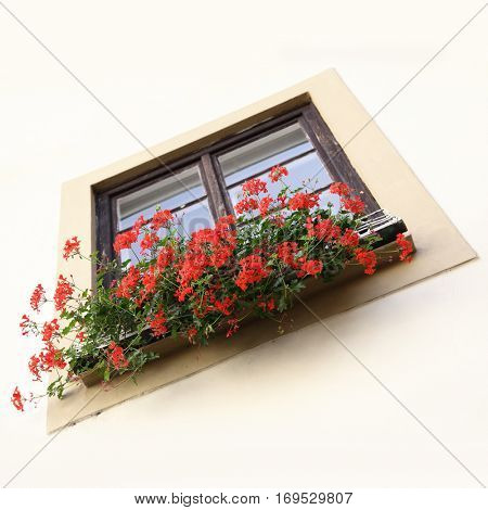 Angle shot of flowerpot on a window sill with red flowers