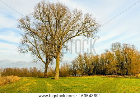 Two trees of different species and length are entwined in each other. It is a sunny day in the Dutch winter season.
