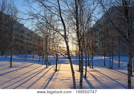 Photo birch trees standing in the snow with long shadows on the bright background of the rising sun and two houses on the left and the right composition.