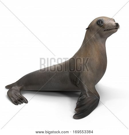 Sea Lion on white background. 3D illustration