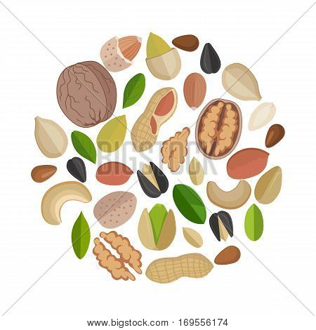 Various nuts composed in circle shape. Nuts collection. Mixed nuts and seeds. Pumkin seeds, almond, walnut, sunflower seed, flax seed, peanut, cashew. Isolated vector illustration on white background.