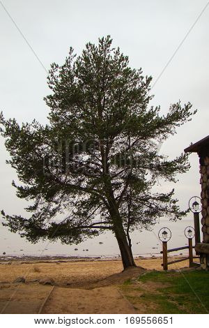 The tree on the beach. Trees and plants are part of nature