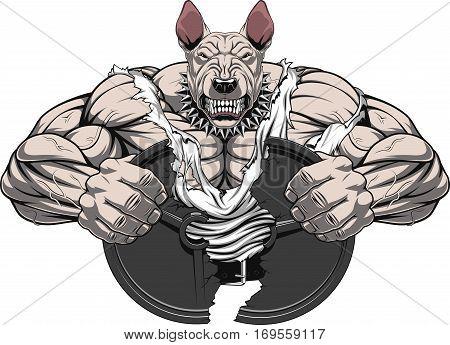 Vector illustration of a strong bullterrier with big biceps break barbell bodybuilder