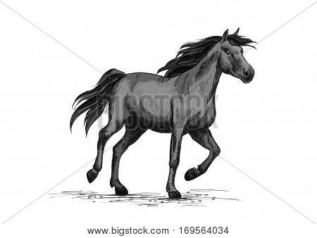 Horse racing on sport races. Wild black race horse mustang running fast gallop. Horserace vector symbol sketch for equine or equestrian exhibition or contest poster