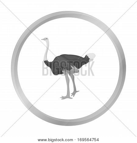 Ostrich icon in monochrome style isolated on white background. Bird symbol vector illustration.