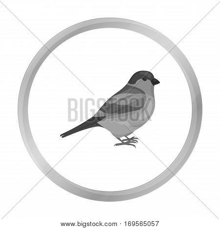 Bullfinch icon in monochrome style isolated on white background. Bird symbol vector illustration.