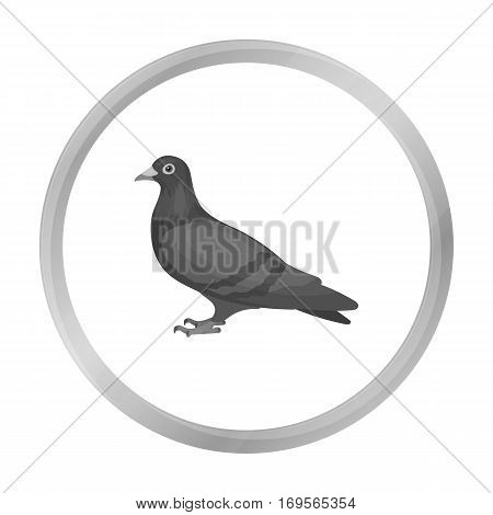 Pigeon icon in monochrome style isolated on white background. Bird symbol vector illustration.