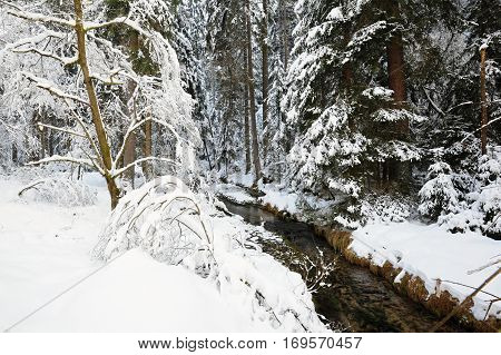 Winter creek with snow in the Czech Switzerland
