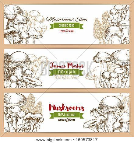 Mushrooms banners of sketched edible mushrooms forest woolly milkcap porcini and forest cep, champignon and chanterelle, russule and milk mushroom or honey agaric, gourmet morel and truffle, . Farmer market or shop vector vertical design set