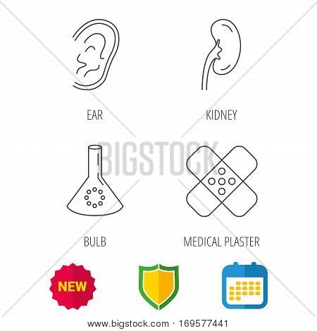 Lab bulb, medical plaster and ear icons. Kidney linear sign. Shield protection, calendar and new tag web icons. Vector