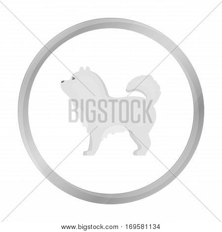 Chow-chow vector illustration icon in monochrome design
