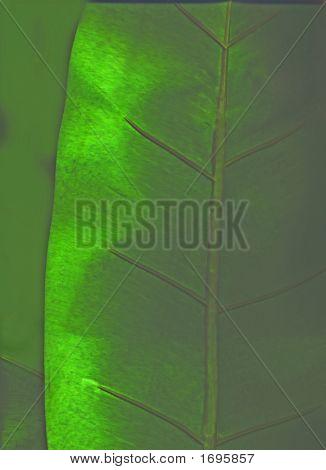 Emerald Background