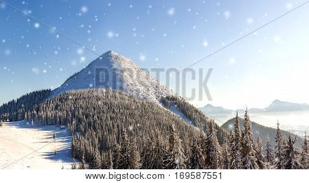 Beautiful Winter Panorama With Fresh Falling Snow. Landscape With Spruce Pine Trees, Blue Sky With S