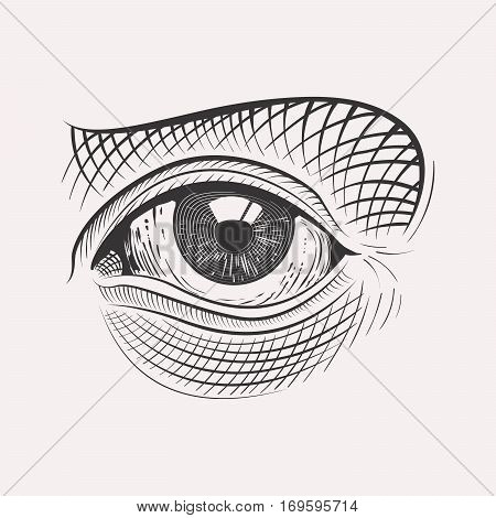 Engraved style eye highly detailed isolated on white background