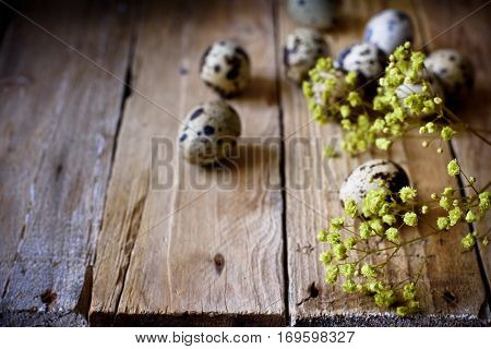 Scattered quail eggs on aged planked wood background with small delicate yellow spring flowers, rustic vintage style, minimalist, kinfolk, Easter, tranquility and simplicity concept