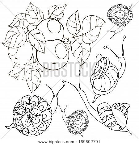 Set with a branch of apple snails.Black and white illustration in cartoon style. Sketch for coloring book page with doodle elements.
