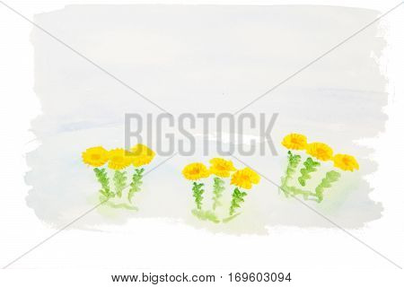 hand painted watercolor flowers of coltsfoot