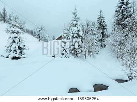 Brook In Winter Carpathian Mountains.