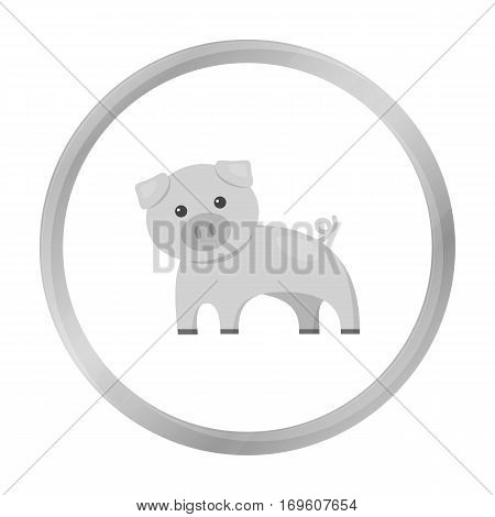 Pig monochrome icon. Illustration for web and mobile.