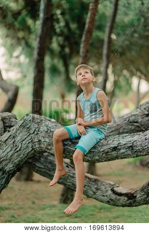 in summer park little boy in shorts and t-shirt sitting on the branches of a tree
